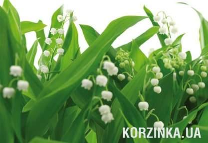 Фотообои Komar 8-517