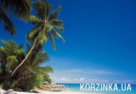 Фотообои Komar 8-511
